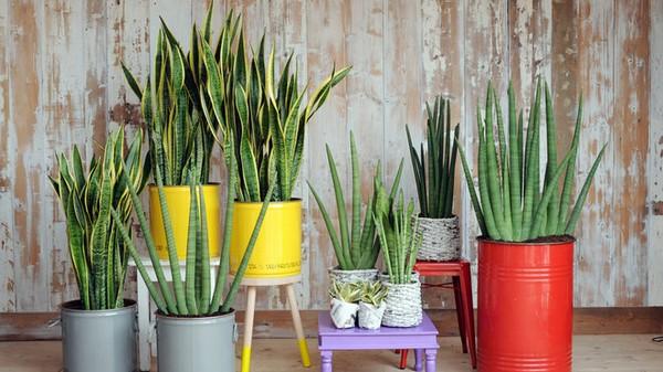 les meilleures plantes d 39 int rieur pour votre sant. Black Bedroom Furniture Sets. Home Design Ideas