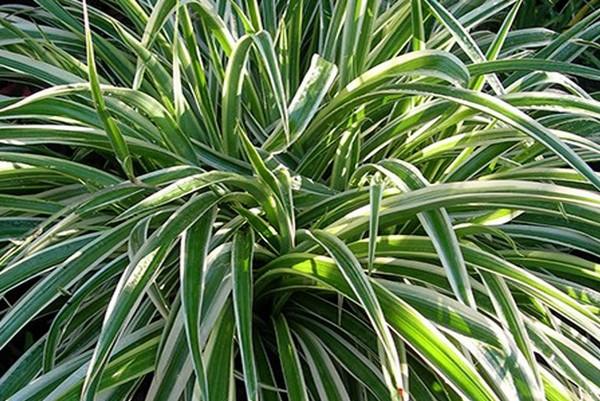 Les meilleures plantes d int rieur pour votre sant for Les plantes d interieur
